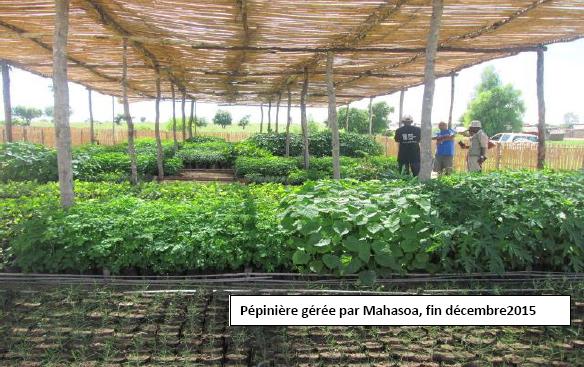 pepinière gérée par Mahasoa